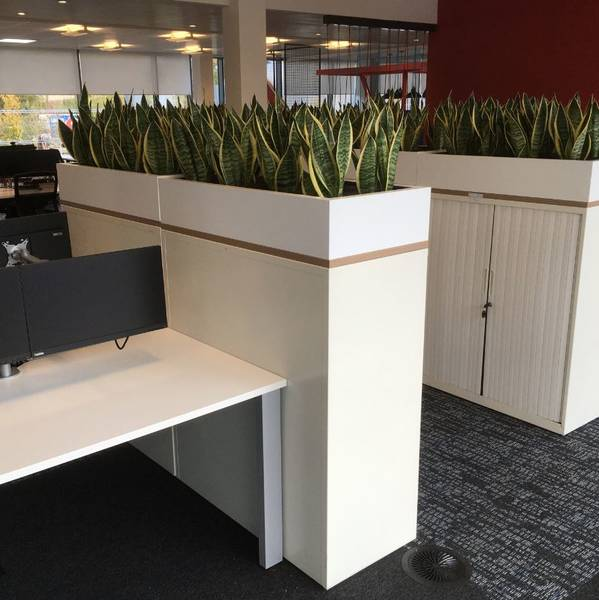 Cabinet Top Plant Displays And Planted Desk Screens For West Midlands Office