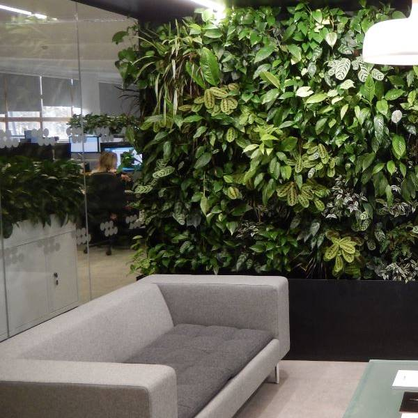 Bringing the outside in with a live plants Greenwall in a West Midlands office Breakout Area